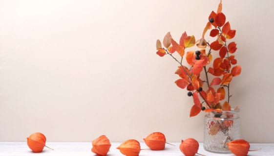 Branches with red leaves in vase and dried plants chinese lantern in interior in autumn time. Background with colorful branches bouquet and empty place.